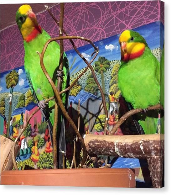 Lovebirds Canvas Print - Happy New 2015 To My Best Friends Kiki by Alessandro  Lo Monaco