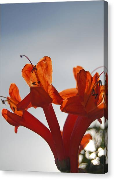 Happy Orange Canvas Print by Jean Booth