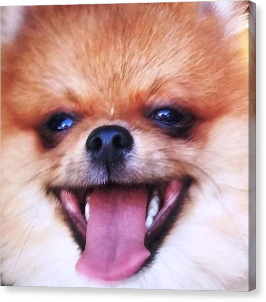 Happy Pom Canvas Print by Teresa Ruiz