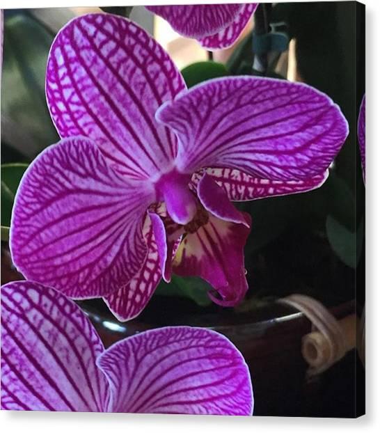 Hawaii Canvas Print - Happy Spring! #maui #hawaii #flower by Darice Machel McGuire