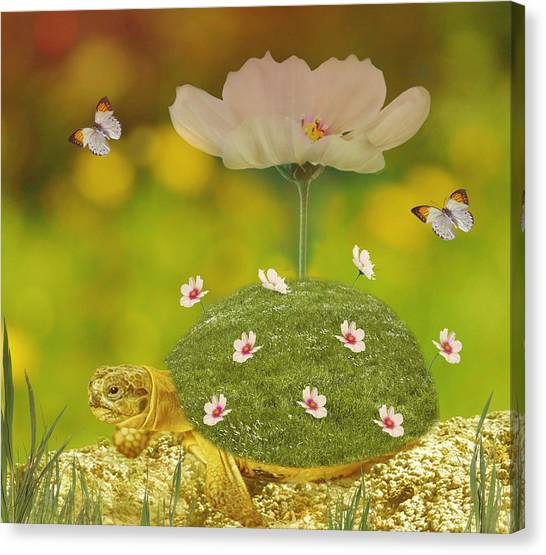 Tortoises Canvas Print - Happy Spring by Art Spectrum