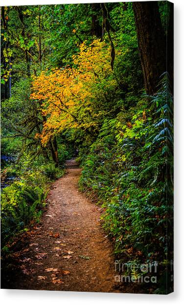 Franklin D. Roosevelt Canvas Print - Happy Trails To You by Jon Burch Photography
