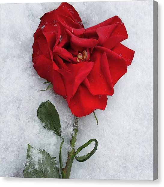 Valentines Day Canvas Print - Snow Valentine by Charlie Cliques