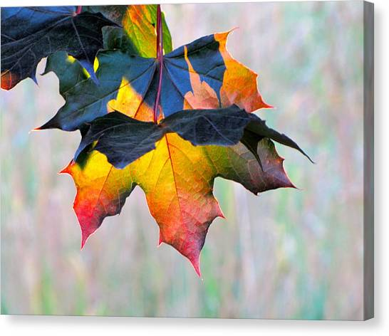 Harbinger Of Autumn Canvas Print