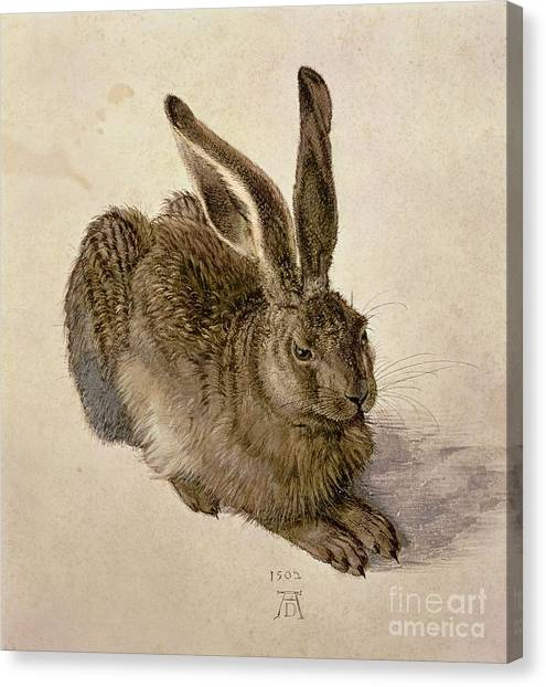 Ears Canvas Print - Hare by Albrecht Durer