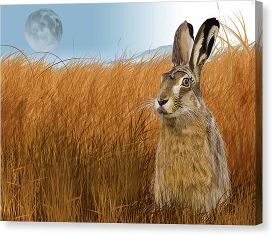 Hare In Grasslands Canvas Print