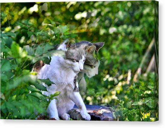 Canvas Print featuring the photograph Harlequin Cat Twins by Chriss Pagani