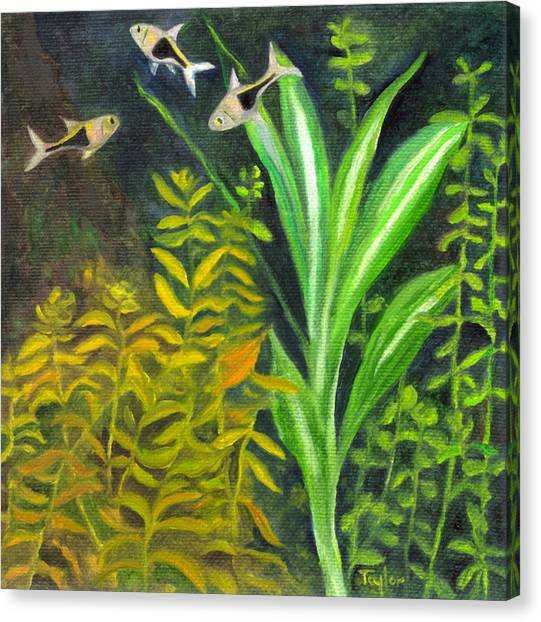 Harlequin Rasboras Canvas Print