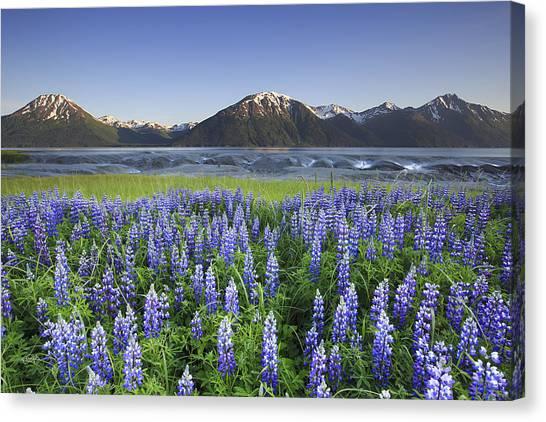 Alaska Canvas Print - Harper by Ed Boudreau