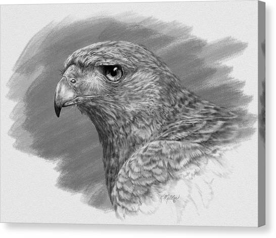 Harris Hawk Drawing Canvas Print