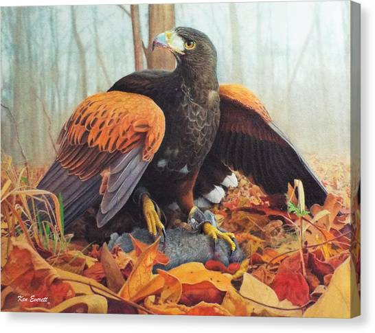 England Artist Canvas Print - Harris Hawk  by Ken Everett