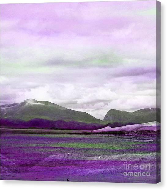 Harris In Violet Canvas Print