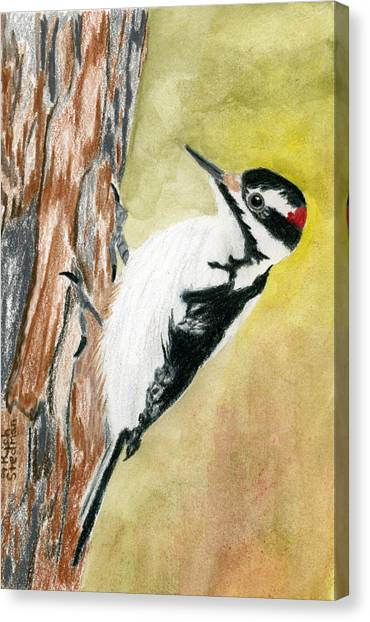 Harry The Hairy Woodpecker Canvas Print