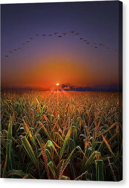 Harvest Migration Canvas Print
