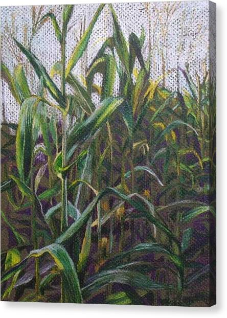 Harvest Shadows Canvas Print by Jan Cline-Zimmerman