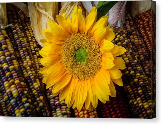Indian Corn Canvas Print - Harvest Sunflower by Garry Gay