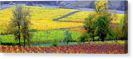 Harvest Time Canvas Print by Margaret Hood