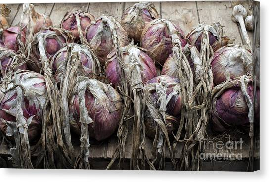 Vegetable Garden Canvas Print - Harvested Onions Red Winter by Tim Gainey
