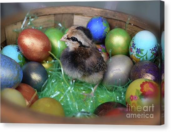 Easter Baskets Canvas Print - Hatched In The Nick Of Time by Malanda Warner