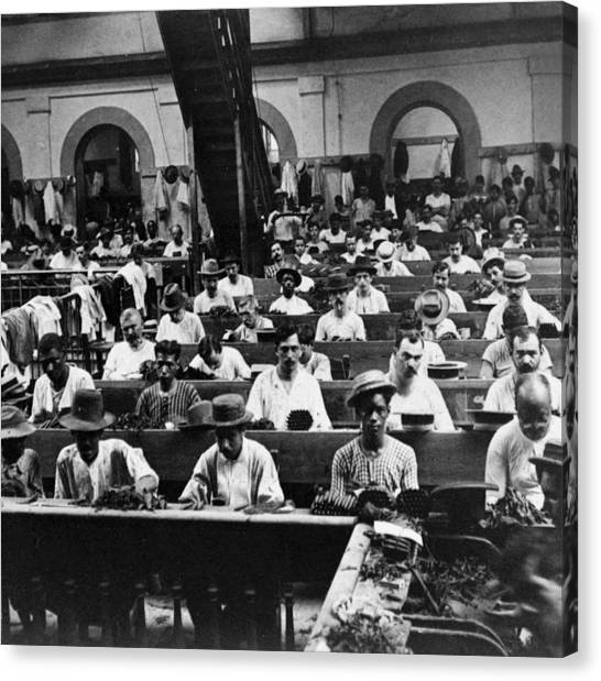 Havana Cuba - Cigars Being Rolled - C 1903 Canvas Print