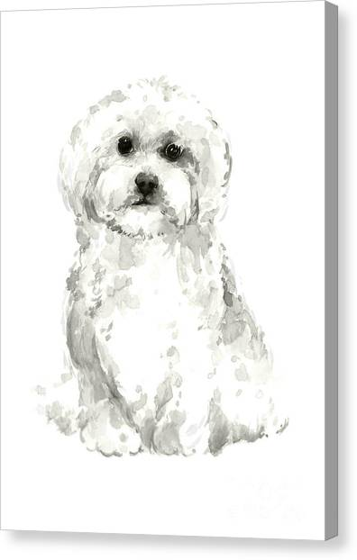 White Maltese Canvas Print - Maltese, Havanese Custom Dog Illustration, White Dog Art Print, Maltese Watercolor Painting by Joanna Szmerdt
