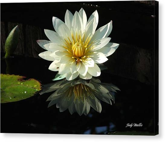 Haven Hospice Water Lily Canvas Print by Judy  Waller