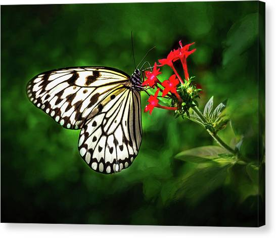 Haven't You Noticed The Butterflies? Canvas Print