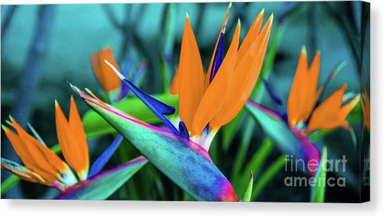 Canvas Print featuring the photograph Hawaii Bird Of Paradise Flowers by D Davila