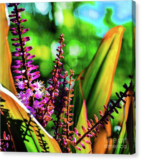 Hawaii Ti Leaf Plant And Flowers Canvas Print