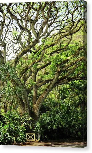 Hawaii Tree-bard Canvas Print