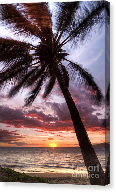 Palm Trees Sunsets Canvas Print - Hawaiian Coconut Palm Sunset by Dustin K Ryan