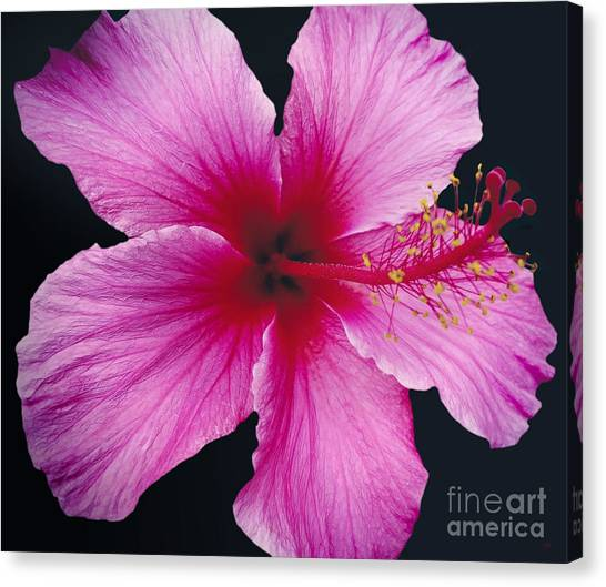 Hibiscus Flower Canvas Prints (Page #50 of 100) | Fine Art America
