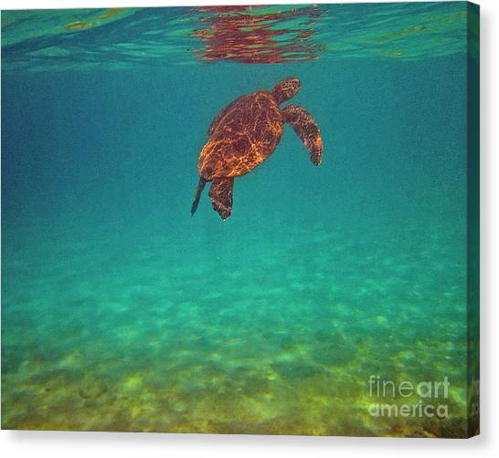 Hawaiian Sea Turtle - Floating Canvas Print