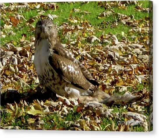 Hawk Falling Leaves Canvas Print