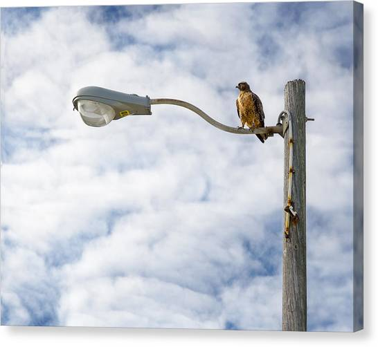 Canvas Print featuring the photograph Hawk by Jon Exley