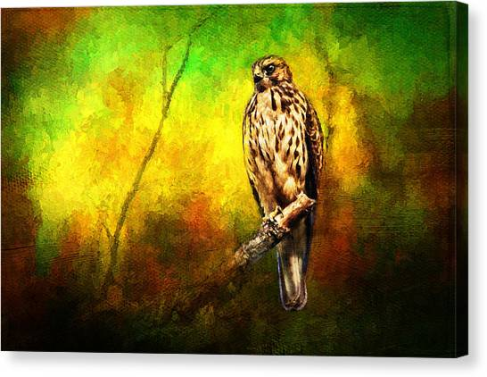 Hawk On Branch Canvas Print