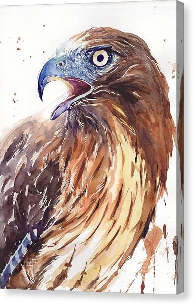Hawks Canvas Print - Hawk Watercolor by Suzann's Art