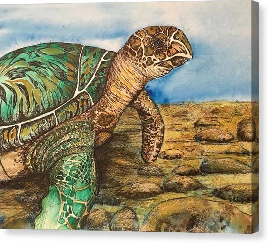 Hawkbilled Sea Turtle Canvas Print