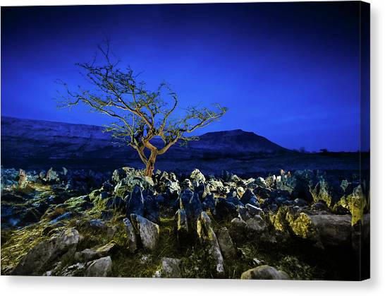 Moorland Canvas Print - Hawthorn Tree In Boulder Field. by Chris North