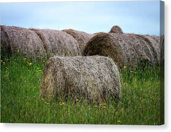 Hay Bales Among The Wildflowrs Canvas Print