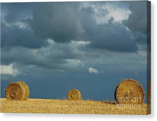 Hay Bales In Harvested Corn Field Canvas Print by Sami Sarkis