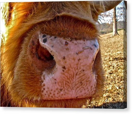 Hay You Smell Good Canvas Print