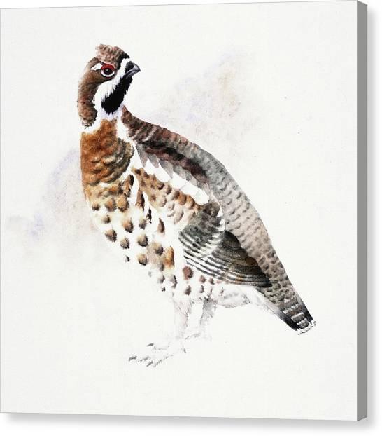 Hazel Grouse Canvas Print