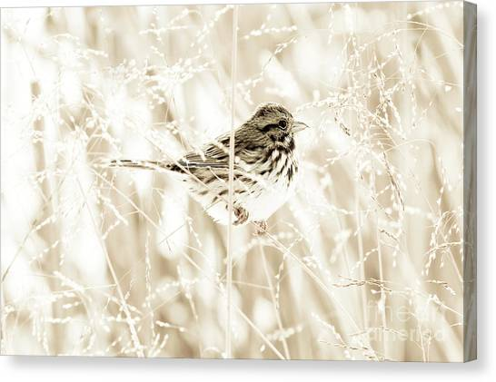 He Feeds The Sparrows Canvas Print