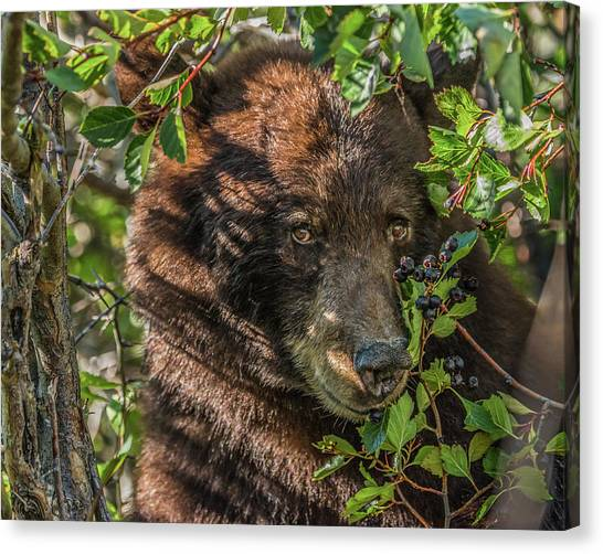 He Was Hiding In A Tree Canvas Print