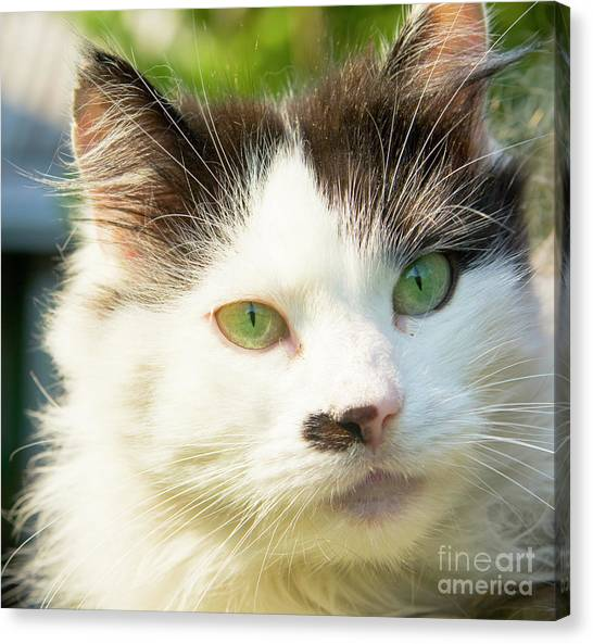 Head Of Cat Canvas Print