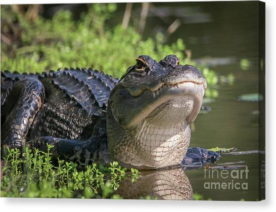 Canvas Print featuring the photograph Heads-up Gator by Tom Claud