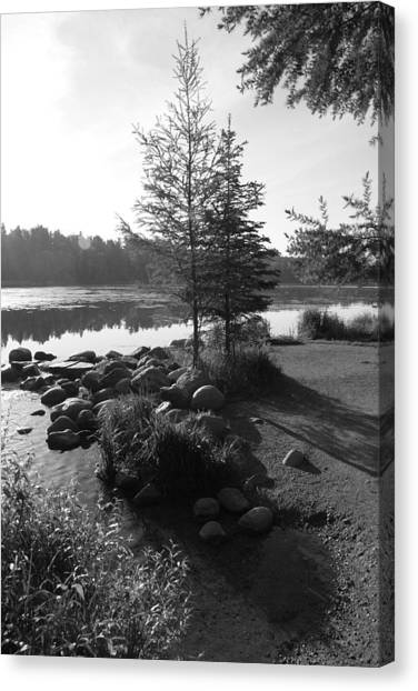 Headwaters Pine Canvas Print by Christopher J Franklin