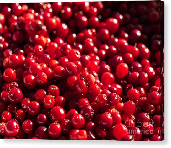 Healthy Pile Of Lingonberries Canvas Print