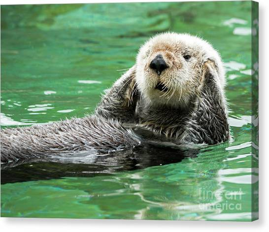 Otters Canvas Print - Hear No Evil by Mike Dawson